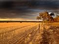 9879-Narrogin-Valley-Sunset