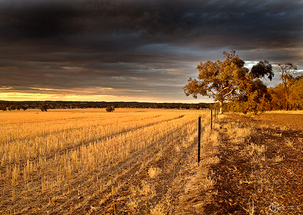 9879-Narrogin-Valley-Sunset
